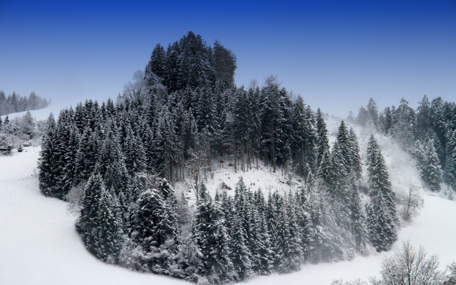 4995x3330 pix. Wallpaper hill, trees, snow, winter, forest, nature