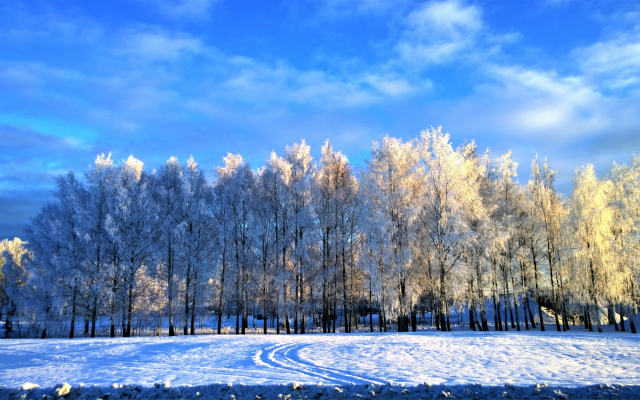 7499x4132 pix. Wallpaper sky, trees, snow, winter, nature