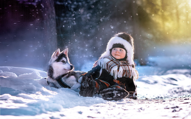 2048x1410 pix. Wallpaper boy, snow, winter forest, puppy, husky, animals, dog, winter