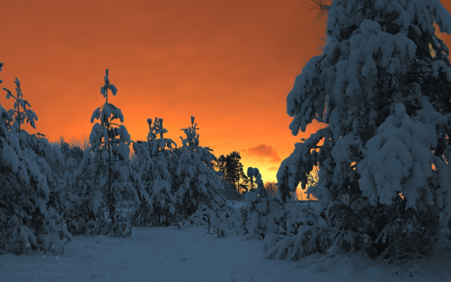 1920x1194 pix. Wallpaper winter fairy tale, winter, forest, snow, winter forest, pine tree, tree, nature, sunset