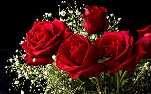 2436x1695 pix. Wallpaper flowers, roses, bouquet, red roses