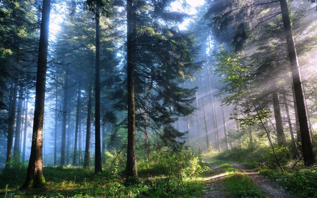 3840x2400 pix. Wallpaper nature, forest, trees, road, sky, morning, sun rays
