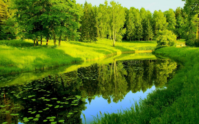 1920x1080 pix. Wallpaper river, park, trees, greenery, reflection, pavlovsk, russia, nature