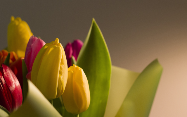 5184x2916 pix. Wallpaper flowers, macro, bokeh, nature, tulips, holiday, march 8