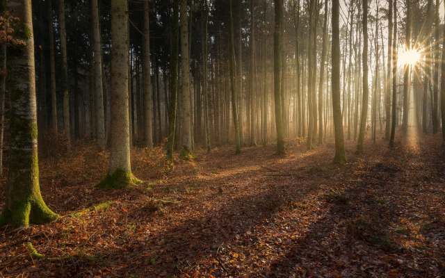 2048x1152 pix. Wallpaper light, trees, magic forest, forest, sun rays, nature