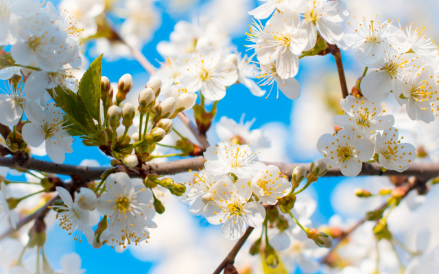 2560x1600 pix. Wallpaper spring, tree, branches, bloom, flowers, nature