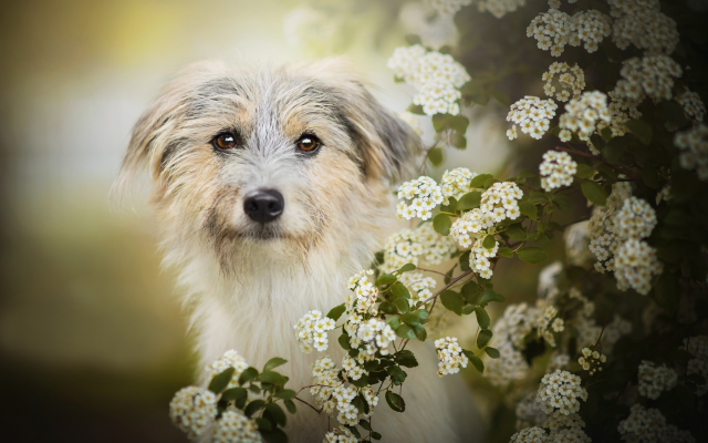 2048x1277 pix. Wallpaper animals, dog, bush, bloom, flowers