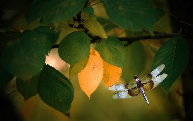 1920x1080 pix. Wallpaper branch, leaves, dragonfly, macro, insects, animals, nature