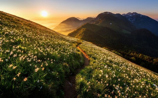 2764x1707 pix. Wallpaper nature, landscape, mountains, meadow, grass, flowers, daffodils, path, sunset, dawn, fog