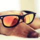 dog, glasses, sleeping wallpaper