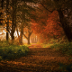 nature, landscape, forest, sunrise, fall, path, leaves, trees, shrubs, sunlight, Germany wallpaper