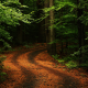 nature, trees, forest, leaves, branch, path, plants, rock, moss, road wallpaper