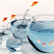 fish, aquarium, water, goldfish, digital art wallpaper