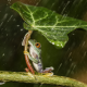 nature, animals, frogs, leaves, plants, rain, water, drops, amphibians wallpaper