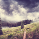 landscape, forest, hill, tree, pine tree, clouds wallpaper