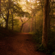 road, path, mist, forest, shrubs, sunlight, trees, leaves, landscape, nature wallpaper