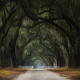 oak trees, gates, tunnel, leaves, dirt road, fence, moss, nature, landscape wallpaper