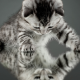 cat, kitten, animals, baby animals, reflections wallpaper