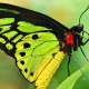butterfly, insect, animals, closeup, macro wallpaper