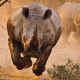 rhino, savannah, animals, desert, nature, rhinoceros wallpaper