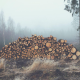 mist, log, wood, forest, fog, nature wallpaper
