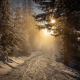 forest, winter, snow, sunrise, walking, mist, nature, landscape, Austria, trees, sunlight wallpaper