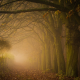 leaves, forest, mist, nature, tree, fall, autumn, morning, sunrise wallpaper