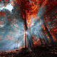 autumn, nature, leaves, forest, sun rays, fall, trees, Turkey wallpaper
