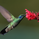 bird, flowers, flying, hummingbird, nature, animals wallpaper
