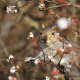 squirrel, branch, nature, animals wallpaper