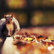squirrel, animals, autumn, leaf wallpaper