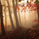 mist, forest, autumn, path, morning, trees, leaves, nature wallpaper