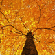 nature, leaves, branch, autumn, maple leaves wallpaper