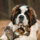 dog, cat, animals, kitten, baby animals wallpaper