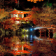 tree, forest, leaves, autumn, Japan, bridge, night, asian architecture, lights, pond, nature wallpaper