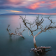 dead tree, Hawaii, sea, sunset, calm, clouds, nature, landscape, usa wallpaper