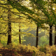 forest, trees, leaves, germany, nature wallpaper
