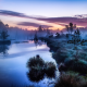 nature, fog, sunrise, tree, river, Germany, calm, water wallpaper