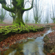 forest, water, tree, moss, autumn, leaf, stream, nature wallpaper