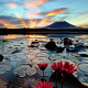 nature, lake, Philippines, flowers, lotus, sunset wallpaper