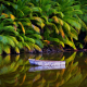 nature, palm trees, jungles, lake, boat, Australia, tropical, island, water, reflection wallpaper