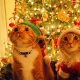 cat, christmas, costume, decorations, christmas tree, animals, holidays wallpaper