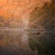 nature, forest, lake, bird, duck, flying, reflections, mist, tree, fall wallpaper
