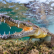 crocodile, underwater, nature, animals, muzzles, fangs, water, reptile, wildlife, fisheye lens wallpaper
