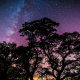 night, stars, tree, silhouette wallpaper