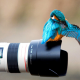bird, colibri, nature, animals, camera wallpaper