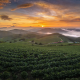 nature, cabbage, field, summer, sunrise, hill, mist, south korea wallpaper