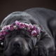 animals, dog, pet, flowers, rose, wreath wallpaper