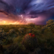 lightning, storm, nature, grass, clouds, colorful, cactus, wildflowers, arizona wallpaper