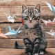 animals, cat, kittens, origami, birds, pet wallpaper